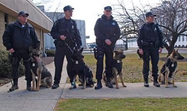 Springfield K9s Grom, Cairo, Blek and Fix with officers Timothy Morrow, Scott Stelzer, Maciej Jasinski and Gail Gethins.