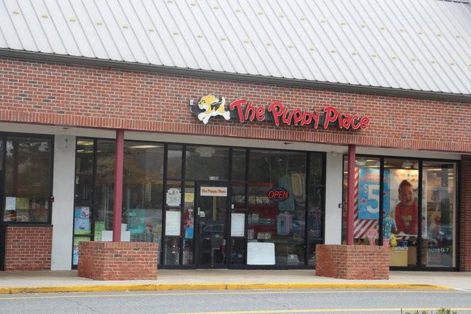 Massachusetts dog retailer has been selling people sick