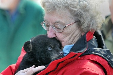 Sister Elizabeth Oleksak, the founder of the Genesis Spiritual Life and Conference Center in Westfield, holds a black bear cub as she joins state enivornmental officials on a research expedition to gather data on the commonwealth's black bear population in 2014.
