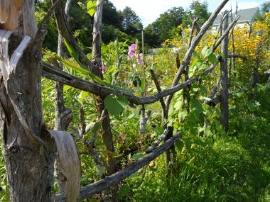 Inventive structures like this fence are built throughout the Northampton Community Garden.