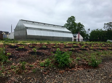 Gardening The Community's farm at 200 Walnut St. in Springfield's Mason Square neighborhood includes a greenhouse.