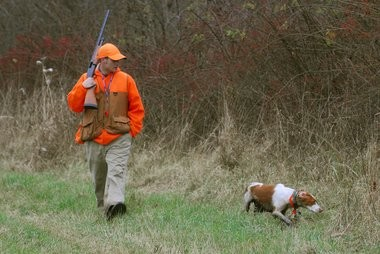 """Joseph M. Felsentreger of Holyoke hunts pheasant in the Southampton Wildlife Management Area off Cool Road with his 2 1/2 yr old Springer Spaniel """"Tucker"""" in this 2009 file photo."""