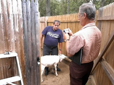 In this 2006 photo, Agawam Enforcement Officer Richard Bosini, right, takes a photograph of Al Griffin and his goats in Griffin's goat pen at his home.