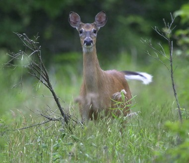 The 2013 deer harvest is 11,413, up 4 percent over the previous season according to the Mass Wildlife preliminary report.