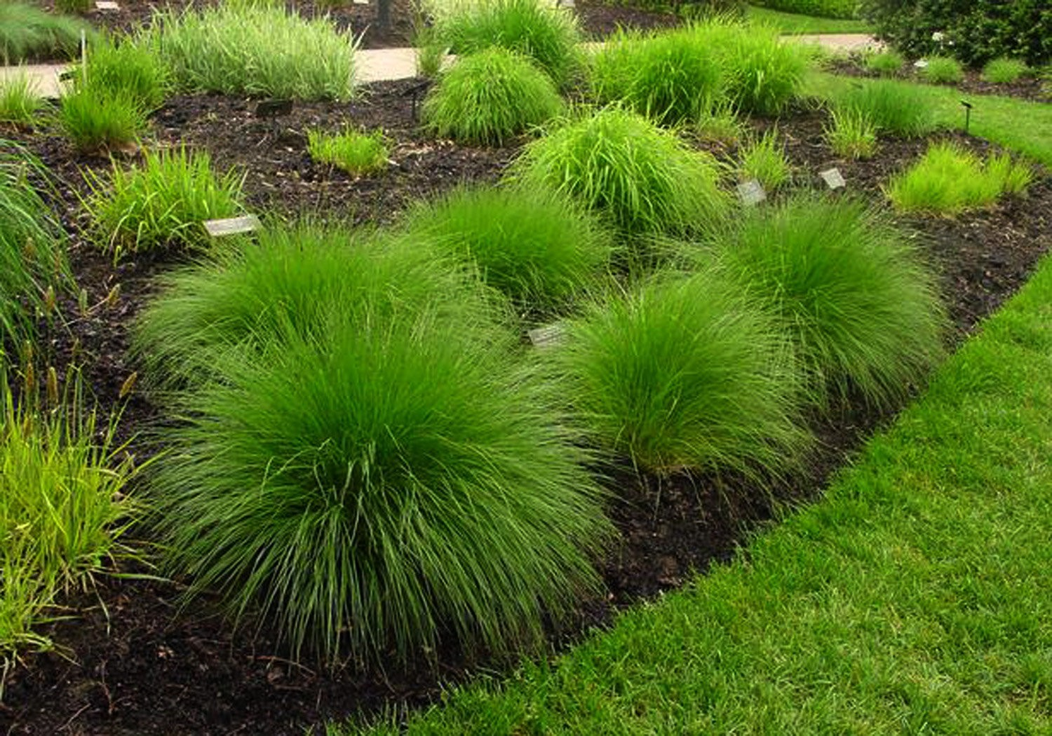 Lawn And Garden Ornamental Grass Can Add A Unique Look To