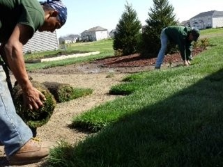 Superior Landscaping employees place sod at a new home in Ann Arbor.