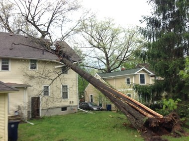 A tree fell on a house at 1717 Dexter Avenue in Ann Arbor's west side Tuesday afternoon following a thunderstorm and heavy winds.