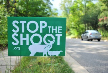 """Stop the shoot"" signs distributed by the Humane Society of Huron Valley are sprouting up across Ann Arbor."
