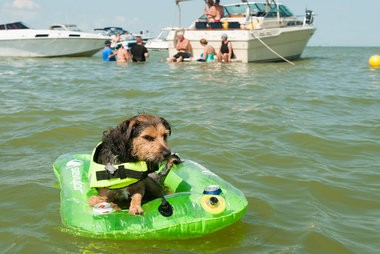 A dog named Eddie floats in a tube near his owner Saturday, Aug. 15, at Boaters Beach in the Saginaw Bay.