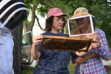 (center) Green Toe Gardens co-founder Joan Mandell shows Tom Fisher, 59 of Royal Oak, and Anna Moceri, 39 of Oakland Township, a frame covered in honeycomb during a hands-on beekeeping class of first year students hosted by Green Toe Gardens at urban farm and apiary Food Field in Detroit on Tuesday evening, Aug. 16, 2016. (Tanya Moutzalias | MLive Detroit)