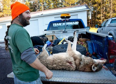 Jeff Powell checks his wolf into the DNR station at Wakefield Friday, Nov. 15, 2013. The wolf was the second recorded kill in Michigan's first wolf hunt. Powell is from Elkton.