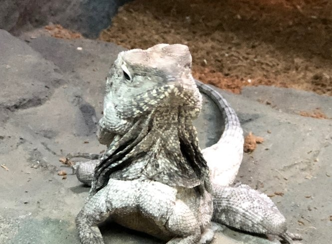 Pet and hold giant snakes and lizards at Michigan's new reptile zoo