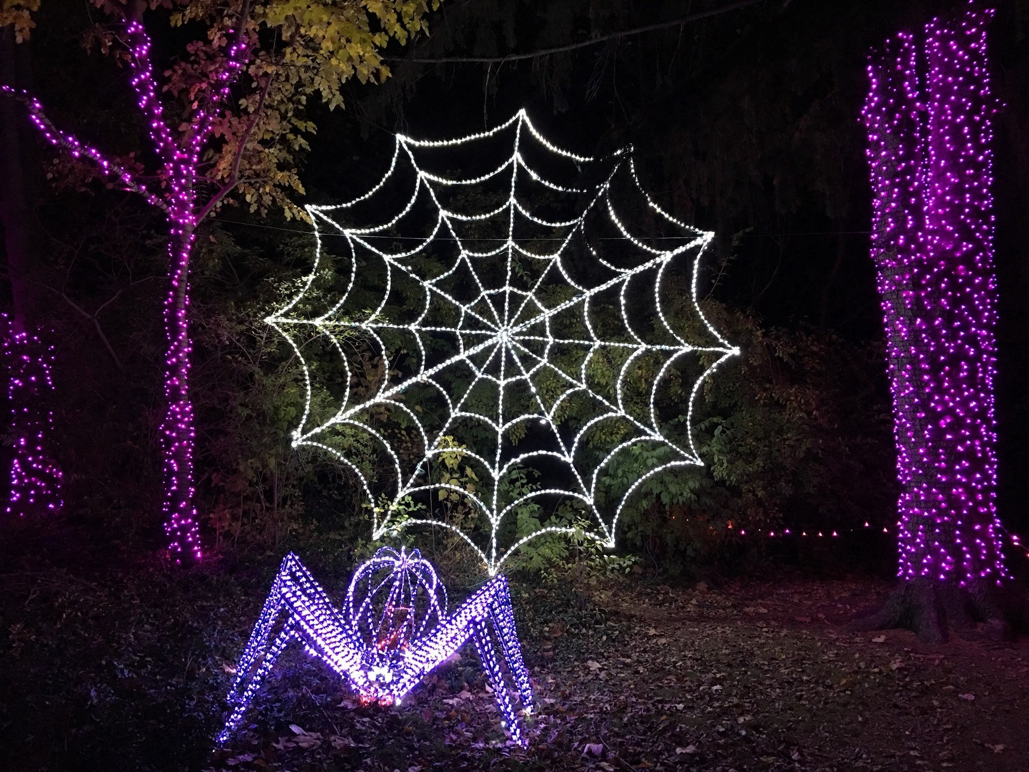 Detroit Zoo Christmas Lights.10 Reasons Not To Miss Wild Lights At The Detroit Zoo