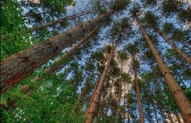 The DNR says its reversal on possible oil drilling at Hartwick Pines State Park is in response to public outcry.