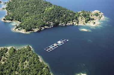 A commercial fish farm in Northern Ontario