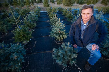 Bert Cregg, A, associate professor of horticulture, poses next the a row of pine trees. Cregg is researching methods to help tree farmers produce better yields.