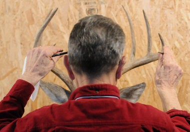 Taxidermy judge Lou Gagliono judges a whitetail mount during the Michigan Taxidermist Association show during at the Grand Rapids Ultimate Sport Show at DeVos Place Thursday, March 21, 2013. (Cory Olsen   MLive.com)