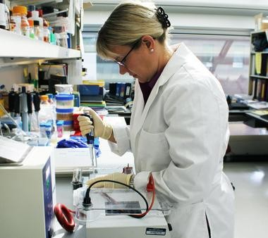 Van Andel Institute breast cancer researcher Dr. Carrie Graveel works in the lab.