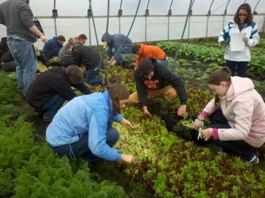 Students work at GVSU's Sustainable Agriculture Project, a hands-on farming space south of the university's Allendale campus.