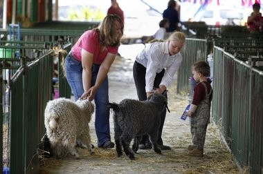 """The Allegan County Fair is a sponsor of a contest to create a new """"Positively Allegan"""" logo."""