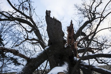 This weekend's ice storm left behind damaged trees and power lines.