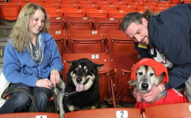 Khiaya, a 5-year-old shepherd-huskie-chow mix, sits with Whitney Rose, of Jackson, and Metoo, a 12-year-old border collie wearing his Red Wings hat and shirt, sits with Scott Newman, of Kalamazoo, before the K-Wings take on the Elmira Jackals.