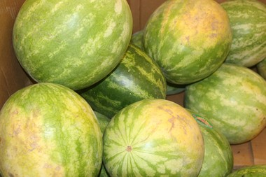 Thirty-three migrant farm workers who helped process watermelons in central Berrien County will get back wages and missed overtime pay as a result of legal action by the U.S. Department of Labor.
