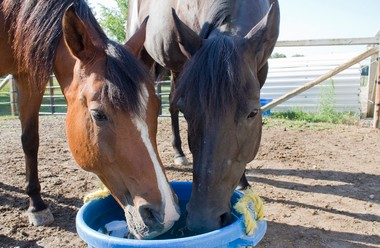 In this file photo, Albert, left, an Egyptian-Arabian Horse, and Diva, an American Quarter Horse, share some water at Kaleidoscope Learning Circle in Birch Run. The programs through the learning center use horses for team building and empowerment exercises.