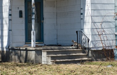 A stray cat walks onto the porch of a property at 239 N. Jefferson St. The property is owned by Steve Ingersoll