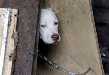 A stray dog looks out from its makeshift shelter in east Detroit in this AP file photo. (AP Photo/Carlos Osorio)