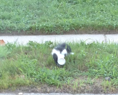Skunk rescued in Royal Oak Township Aug. 4, 2016