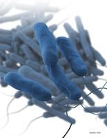 An illustration of potentially deadly Legionella bacteria.