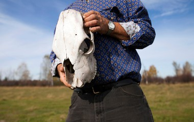 John Koski holds the skull of a dead cow found on his Matchwood Township farm Thursday, Oct. 10, 2013. The 68-year-old, who has a second cattle farm in Bessemer, has the highest number of reported wolf attacks in Michigan. Koski supports the upcoming Upper Peninsula wolf hunt.