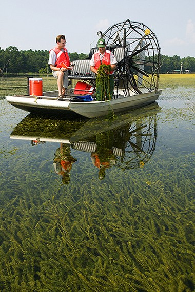 Mike Netherland (left) and Donald Morgan of the Army Corps of Engineers collect herbicide-resistant hydrilla from Lake Seminole in northern Florida.