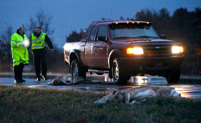 9 things to know about deer-vehicle crashes in Michigan
