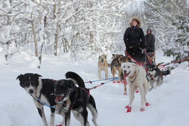 A dog team and riders heading out on the trail. Photo courtesy of Nature's Kennel.
