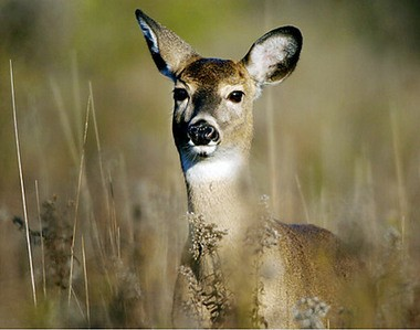 A 47-year-old Davison man was shot Saturday, Dec. 26, 2015 in Lapeer County's Oregon Township after he was mistaken for a deer while hunting on state gaming land.