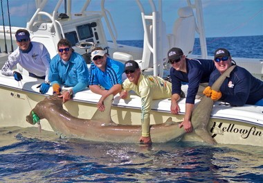 Left to Right: Peter Miller, Captain Randy Towe, Tom Frank, Sam Frank, Mike Frank and Madison the boat mate work get a good look at a 500 pound hammerhead shark before letting it go.