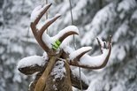 There are fewer deer than there was a couple years ago, which the Michigan Department of Natural Resources says plays into a prediction the firearm deer season will be a mixed bag.
