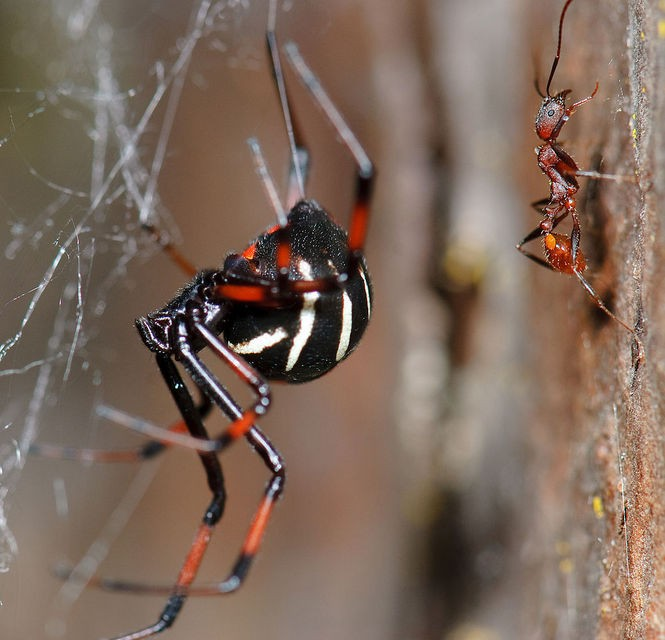 22 of the spiders you might find in Michigan (and one you
