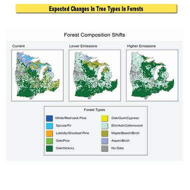 This graphic shows the expected change in types of trees in Michigan forests due to warming.