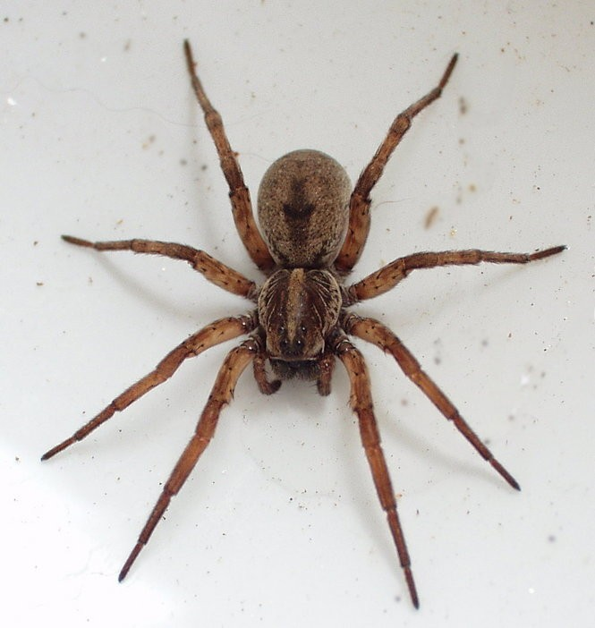 17 New York spiders that will make your skin crawl