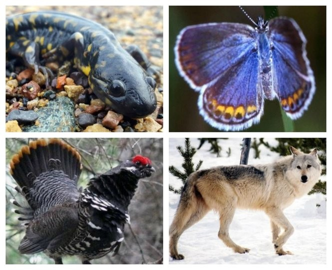 New York's endangered species list: Meet the 53 cute, creepy