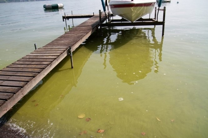 Algae coats the surface of the west shore of Skaneateles Lake, off Thornton Grove Road on Sept. 16, 2017. (Photo by Charles Major)