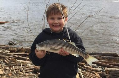 A happy Lucas Brown, 8, of Amsterdam, NY. holds up his first striped bass ever that he caught and released on the Hudson River at Troy,N.Y.