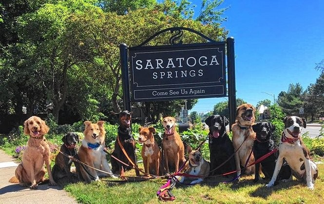 Tail-wagging welcome: 4 great Upstate NY cities to vacation
