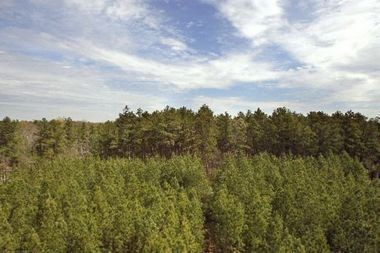 The New Jersey Pinelands Commission today rejected a proposed 22-mile natural gas pipeline through the Pinelands region.