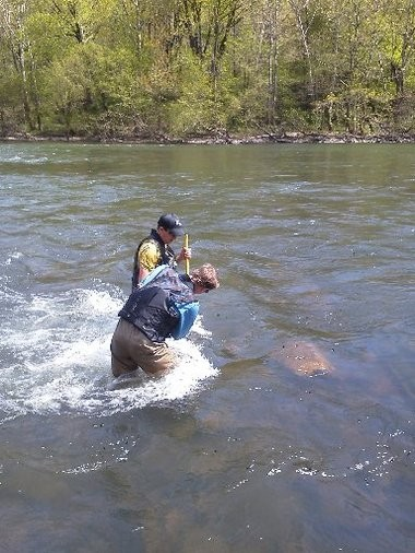 A scientist from the Pennsylvania DEP catching fish to study in the Buffalo Creek in Juniata County, Pa.