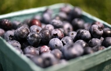 Fresh blueberries are worth celebrating this summer.