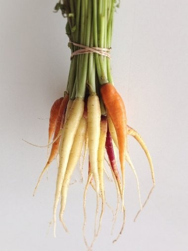 Carrots come in a rainbow of colors.